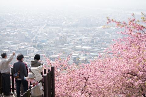 #21 河津桜.JPG